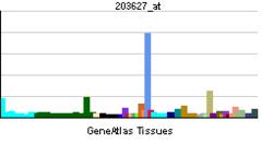 PBB GE IGF1R 203627 ĉe tn.png