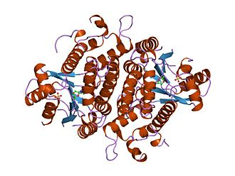 Thymidine kinase from herpesvirus - Image: PDB 1kim EBI