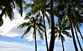 Palms and Sky (23231226964).jpg
