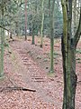 Path in the Chantries - geograph.org.uk - 639536.jpg