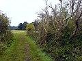 Pathway near Burial Ground Plantation - geograph.org.uk - 563758.jpg