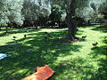 Paunovi na Lokrumu.JPG