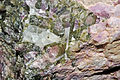 Pegmatite de tourmalines rubellite, elbaïte, calcite (Brésil).JPG