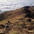 Pemandangan di sabana 1 jalur selo dengan pemandangan diatas awan.jpg