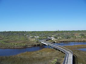 Pensacola FL Big Lagoon SP from obs tower06.jpg