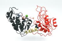 Structuur van fosfoglyceraatkinase 3PGK
