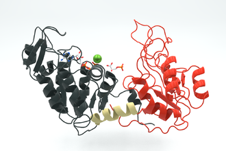 Phosphoglycerate kinase - Image: Phosphoglycerate kinase 3PGK
