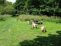 Picnic area on the Royal Military Canal Path - geograph.org.uk - 1352665.jpg