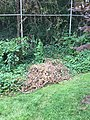 Pile of dead vines by a chain link fence in Northern Virginia.jpg
