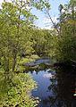 Pinelands Stream.jpg