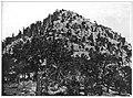 Pinus flexilis plate 18.jpg