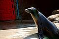 Pittsburgh Zoo (4509866980).jpg