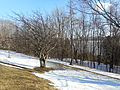 Plaines d Abraham en hiver 062.JPG