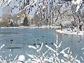Plan d'eau sous la neige.jpg