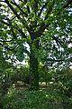 Plodove Novokahovka's Arboretum 50 (YDS 1177).jpg