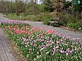 Poland. Warsaw. Powsin. Botanical Garden 046.jpg
