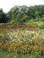 Poltava Botanical garden (21).jpg