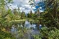 Pond in boreal forest of Kivitunturi, Savukoski, Lapland, Finland, 2021 June - 2.jpg