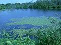 Ponds along Attikamek Trail at Sault Ste. Marie Canal NHS.JPG