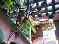 Posada de Las Flores, Loreto, Baja California (432542158).jpg