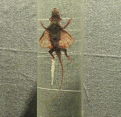 Preserved specimens cutted - Kunming Natural History Museum of Zoology - DSC02409.JPG