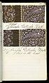 Printer's Sample Book (USA), 1880 (CH 18575237-31).jpg