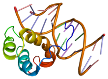 Protein PITX1 PDB 1yz8.png