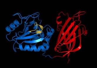 Dephosphorylation - Image: Pten