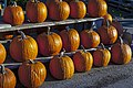 Pumpkins on rack at Wright's Farm, Gardiner, NY.jpg