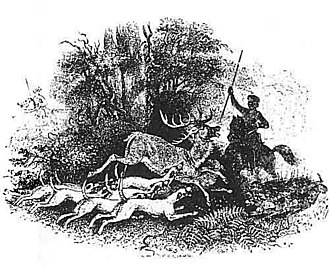 Pwyll - Pwyll, Prince of Dyfed hunting with his hounds