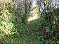 Quarry view of quarry lane, Barrmill.JPG