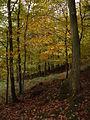 Quercus petraea (2943605941).jpg