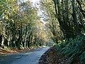 Quiet Lane - geograph.org.uk - 647911.jpg