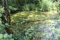Réserve naturelle Marais Lavours Aignoz Ceyzérieu 36.jpg