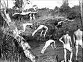 RAAF 1943 swimming nude.jpeg