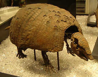 Pampatheriidae Family of extinct armadillo-like grazing mammals