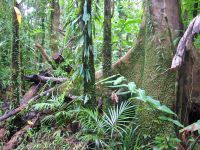 Wet Tropics in Queensland