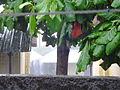 Rain season in Mayotte (2851355474).jpg