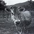 Ray farm 1940s Ashland Alabama 06.jpg