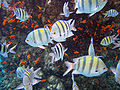 Red sea-reef 3206.jpg