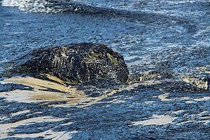 Refugio oil spill - Crude oil washes up on Refugio State Beach