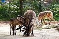 Reindeers (5826273634).jpg