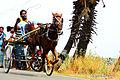 Rekla Horse Race in Budalur.jpg