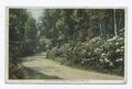 Rhododendron Drive, Pocono Manor, PA (NYPL b12647398-79549).tiff