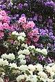 Rhododendronpark Bremen 20090513 248.JPG