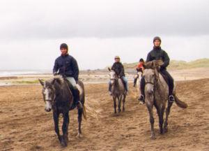 Connemara pony - Connemara ponies ridden for recreation