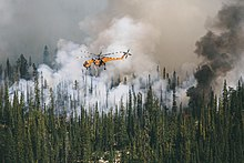 Photo of a helicopter above a coniferous forest engulfed in smoke