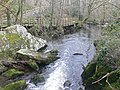 River Cefni in the Dingle - geograph.org.uk - 1738438.jpg