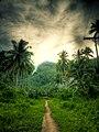Road to Ton-ok Falls - Flickr.jpg