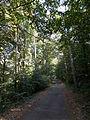 Road to Várhegy hill. - Tamási, Hungary.JPG